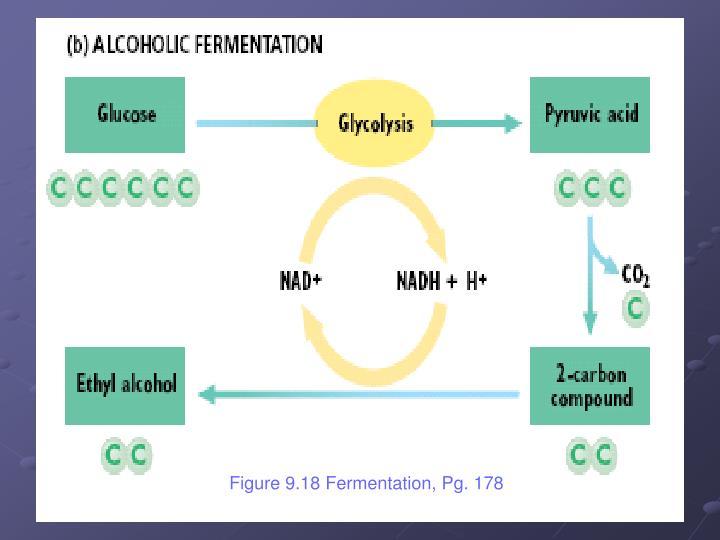 Figure 9.18 Fermentation, Pg. 178