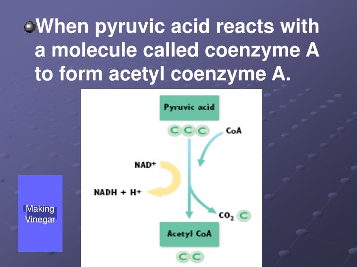 When pyruvic acid reacts with a molecule called coenzyme A to form acetyl coenzyme A.
