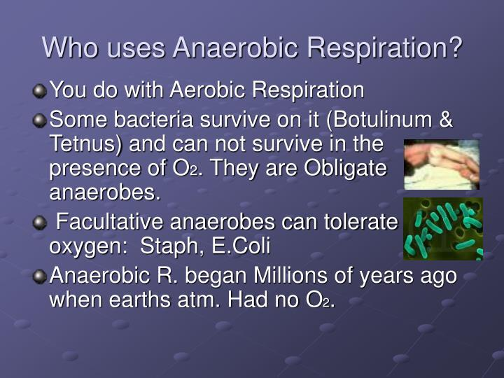 Who uses Anaerobic Respiration?