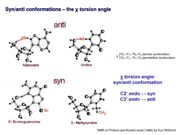 Syn/anti conformations – the χ torsion angle