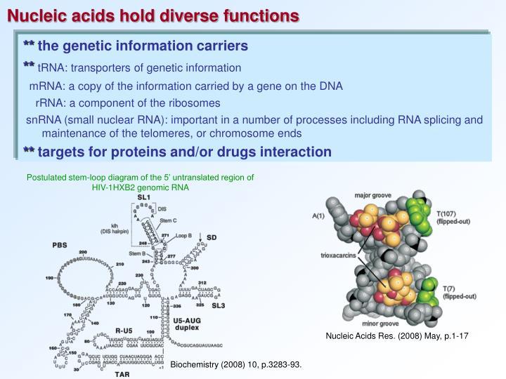 Postulated stem-loop diagram of the 5' untranslated region of HIV-1HXB2 genomic RNA