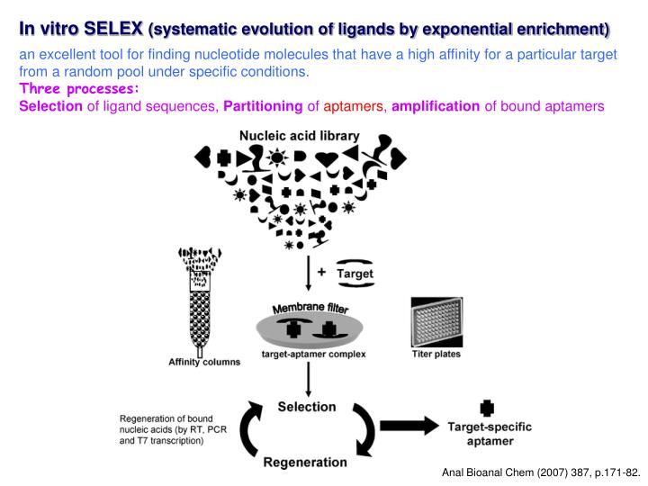 In vitro SELEX