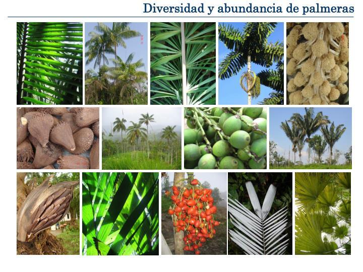 Diversidad y abundancia de palmeras