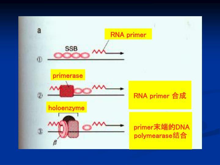 RNA primer
