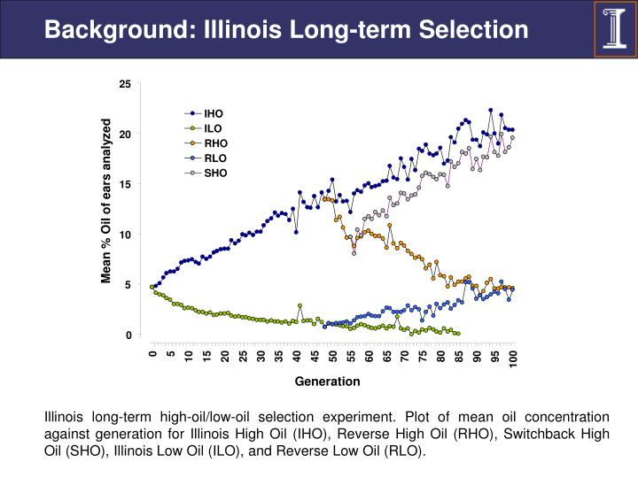 Background: Illinois Long-term Selection