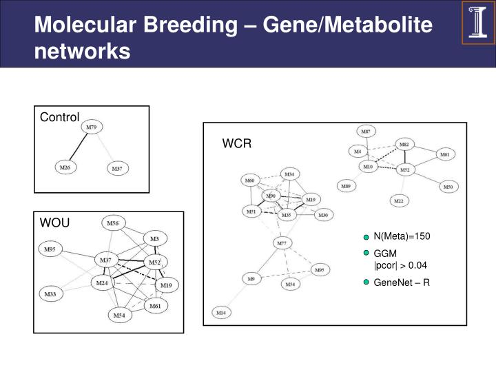 Molecular Breeding – Gene/Metabolite networks