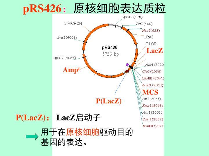 pRS426
