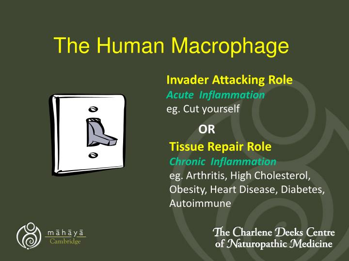 The Human Macrophage