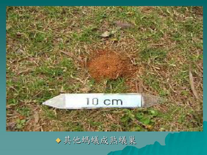 其他螞蟻成熟蟻巢
