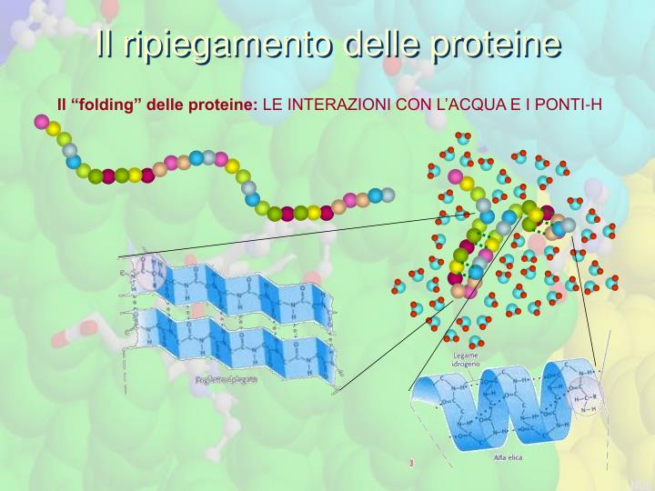 Il ripiegamento delle proteine
