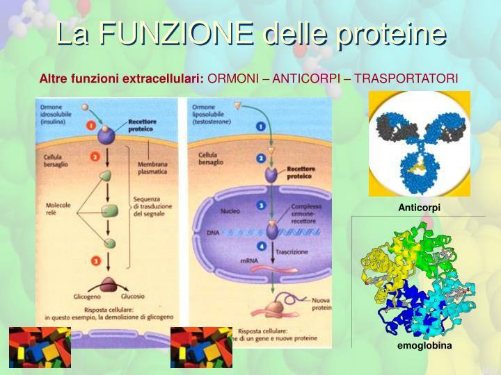 La FUNZIONE delle proteine