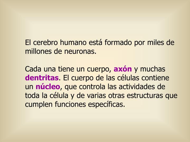 El cerebro humano está formado por miles de millones de neuronas.