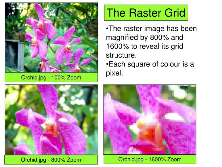 The Raster Grid