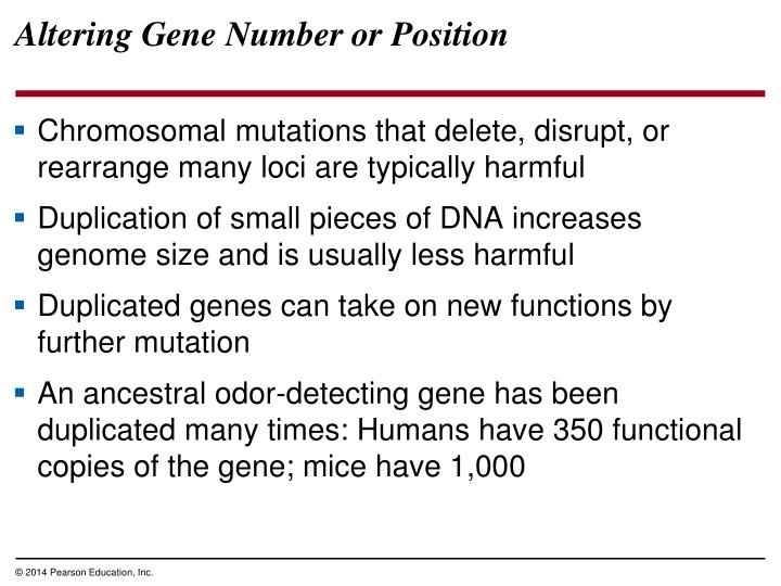 Altering Gene Number or Position