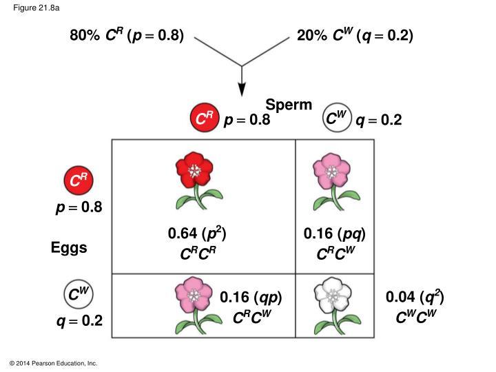 Figure 21.8a