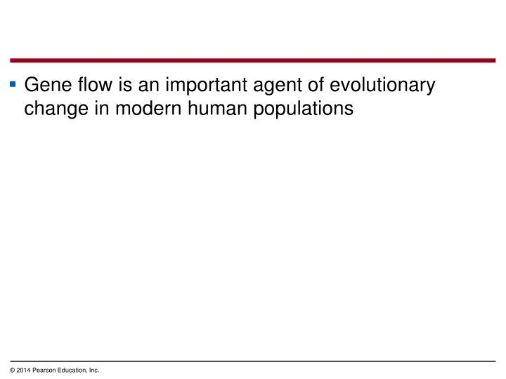 Gene flow is an important agent of evolutionary change in modern human populations