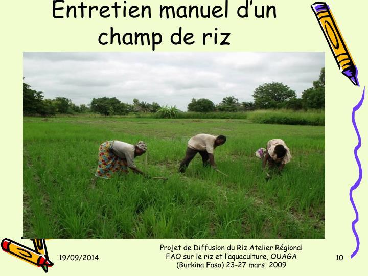 Entretien manuel d'un champ de riz