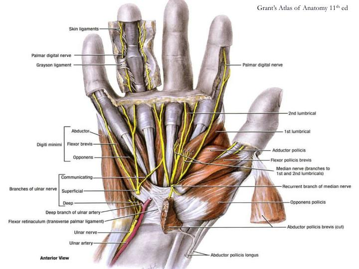 Grant's Atlas of Anatomy 11