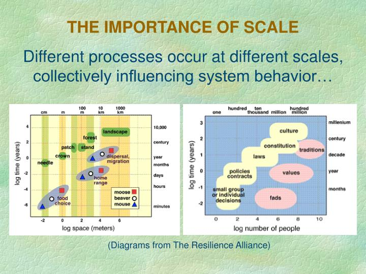 THE IMPORTANCE OF SCALE