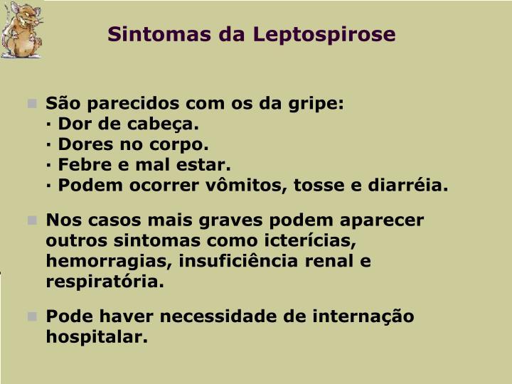 Sintomas da Leptospirose