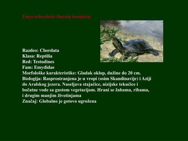 Emys orbicularis (barska kornjača)