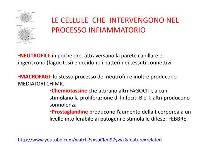 LE CELLULE  CHE  INTERVENGONO NEL PROCESSO INFIAMMATORIO