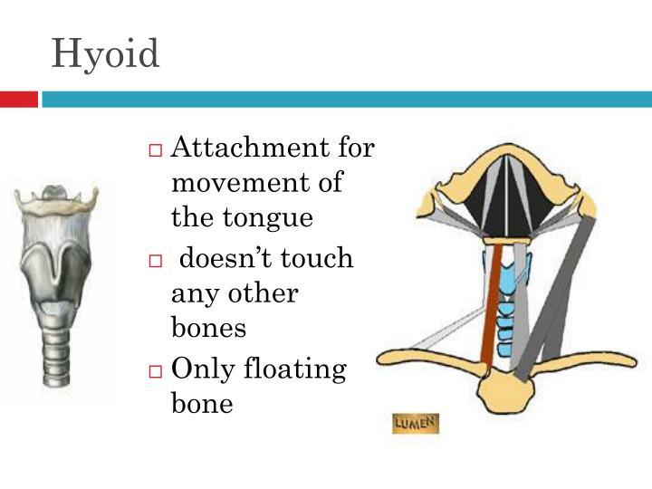 Hyoid
