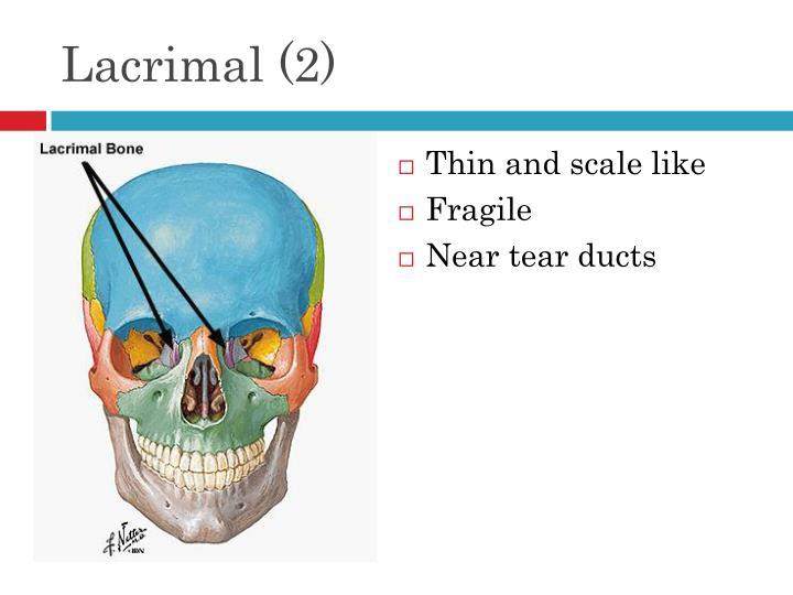 Lacrimal (2)