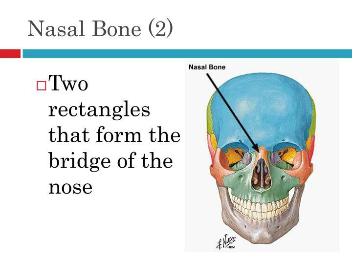 Nasal Bone (2)