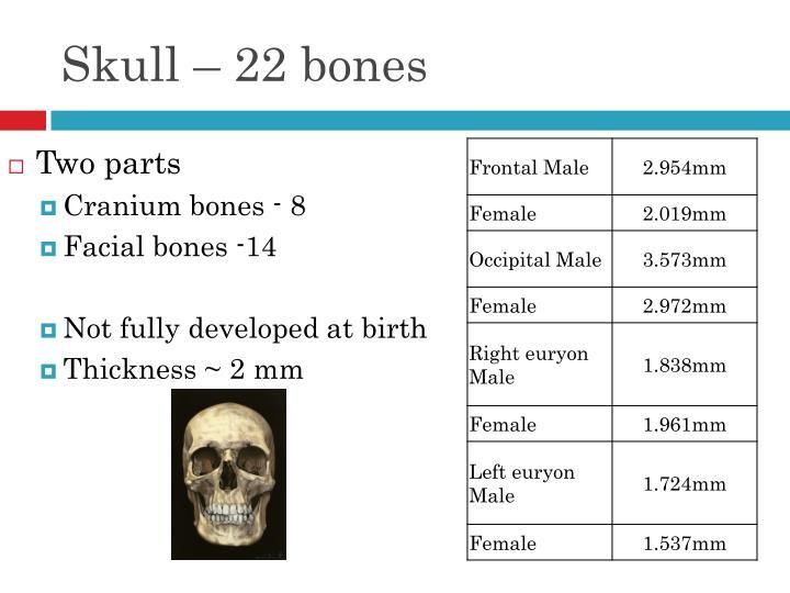 Skull – 22 bones