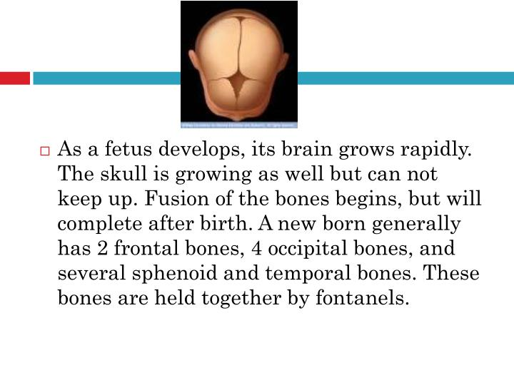 As a fetus develops, its brain grows rapidly. The skull is growing as well but can not keep up. Fusion of the bones begins, but will complete after birth. A new born generally has 2 frontal bones, 4 occipital bones, and several sphenoid and temporal bones. These bones are held together by fontanels.