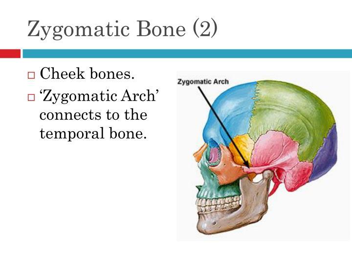 Zygomatic Bone (2)
