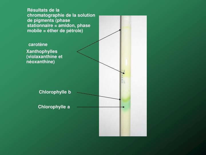 Résultats de la chromatographie de la solution de pigments (phase stationnaire = amidon, phase mobile = éther de pétrole)