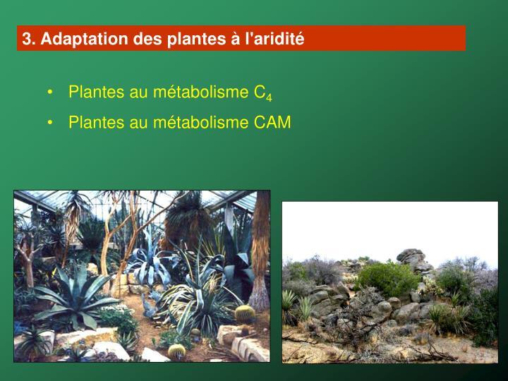 3. Adaptation des plantes à l'aridité