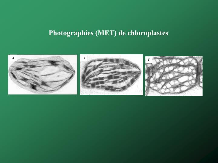 Photographies (MET) de chloroplastes
