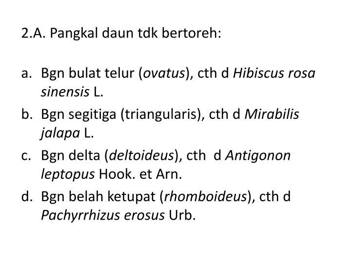 2.A. Pangkal daun tdk bertoreh: