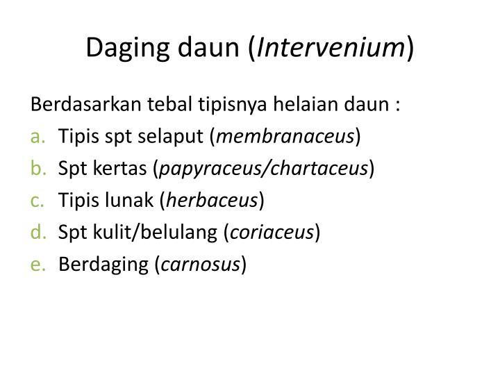 Daging daun (