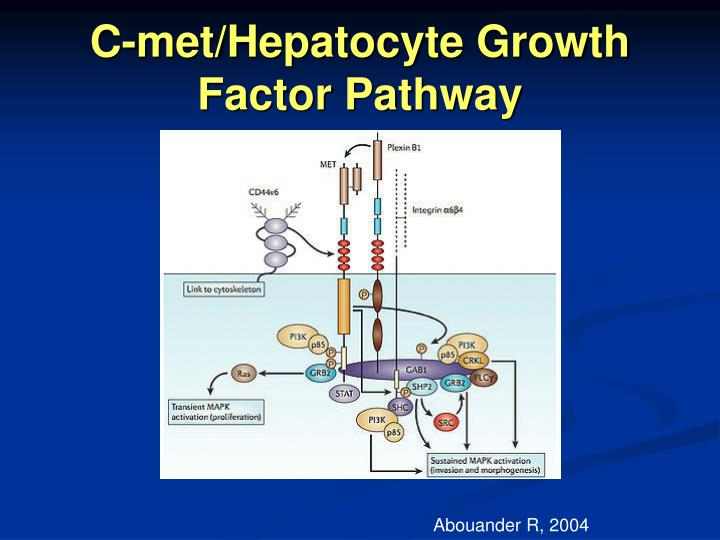 C-met/Hepatocyte Growth Factor Pathway