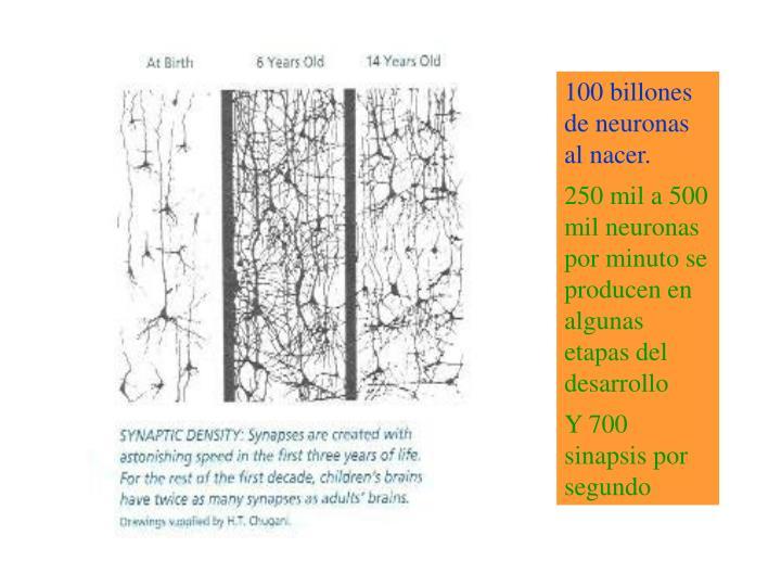 100 billones de neuronas al nacer.