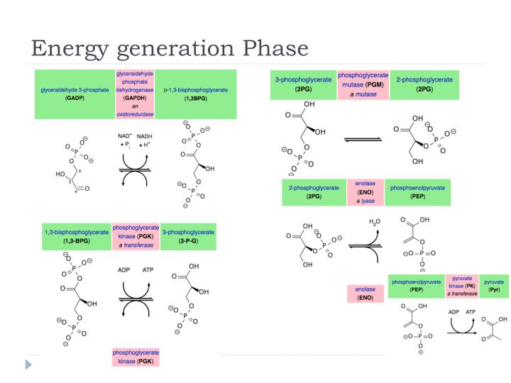 Energy generation Phase
