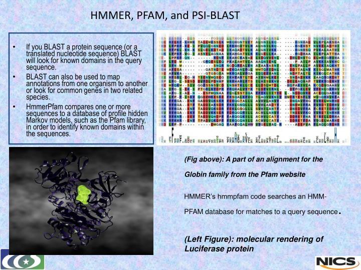 HMMER, PFAM, and PSI-BLAST