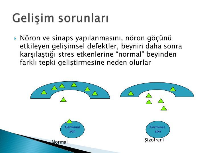 Nron ve sinaps yaplanmasn, nron gn etkileyen geliimsel defektler, beynin daha sonra karlat stres etkenlerine normal beyinden farkl tepki gelitirmesine neden olurlar