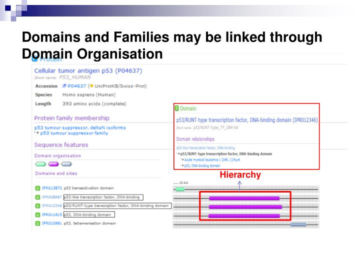 Domains and Families may be linked through Domain Organisation
