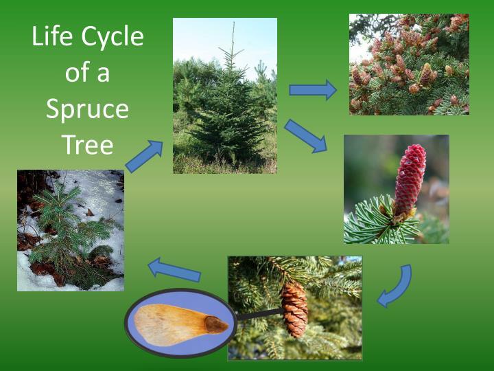 Ppt - Plantae Powerpoint Presentation