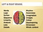 left right brains