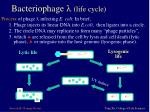 bacteriophage l life cycle