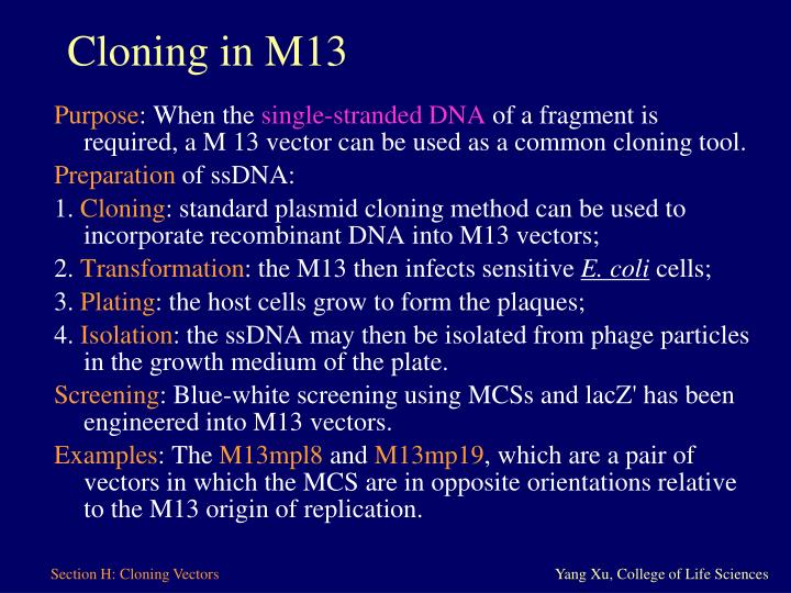 Cloning in M13
