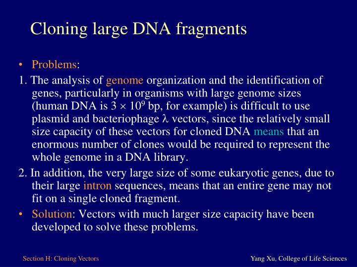 Cloning large DNA fragments