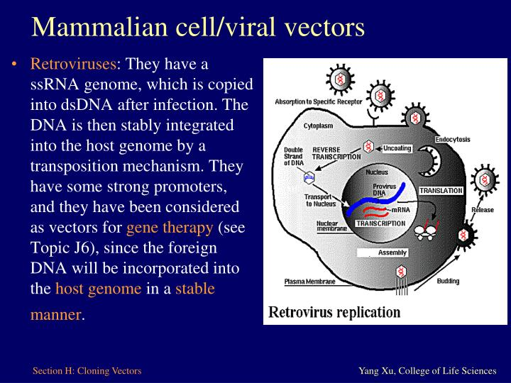Mammalian cell/viral vectors