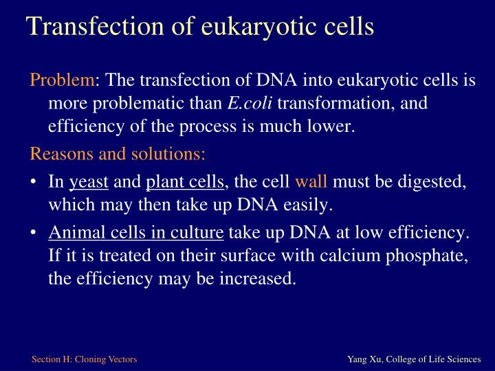 Transfection of eukaryotic cells
